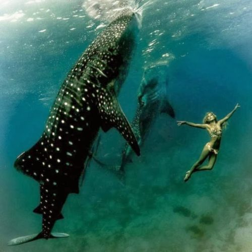 THE GIRL AND THE WHALE SHARK