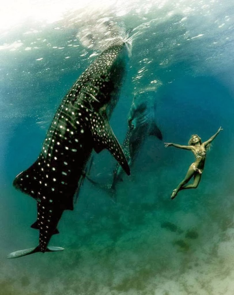 The Girl And The Whale Shark Bohemian Diesel Blog