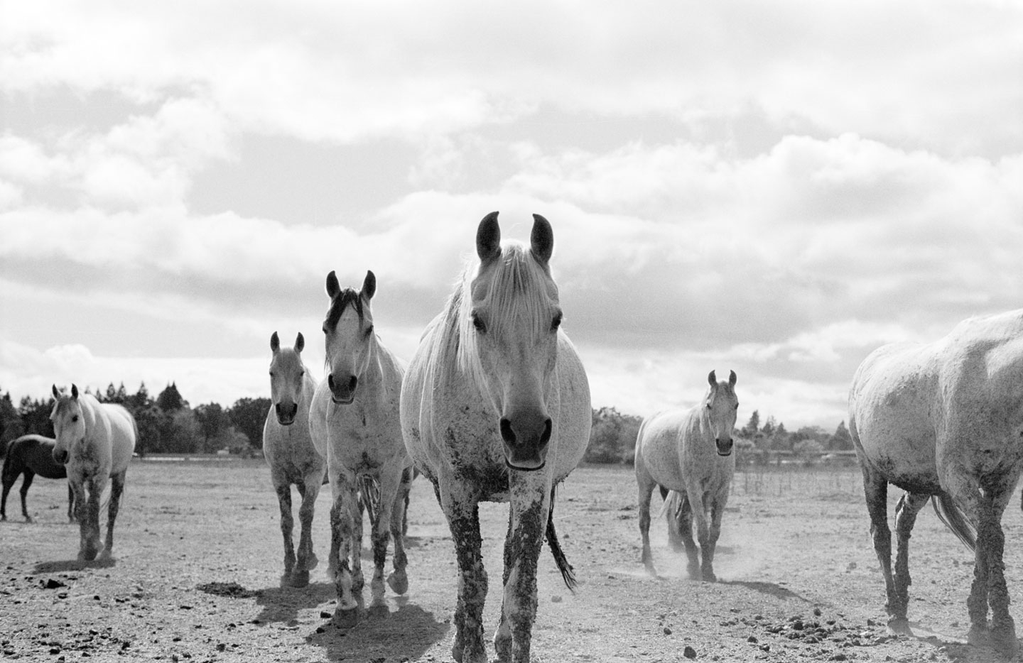 photographer Molly Stone shot wild horses
