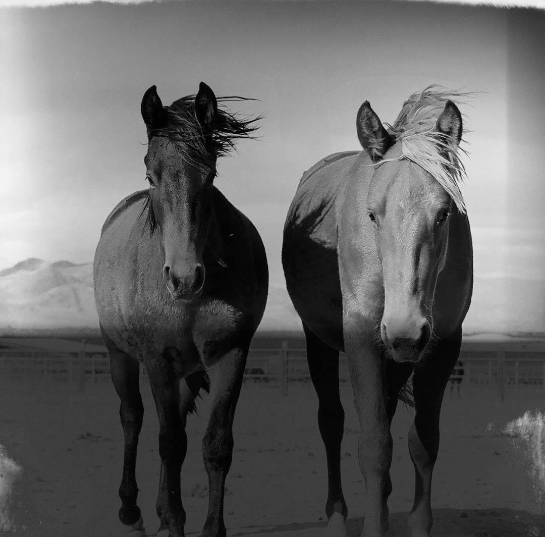 Molly Stone like it to shoot with wild horses