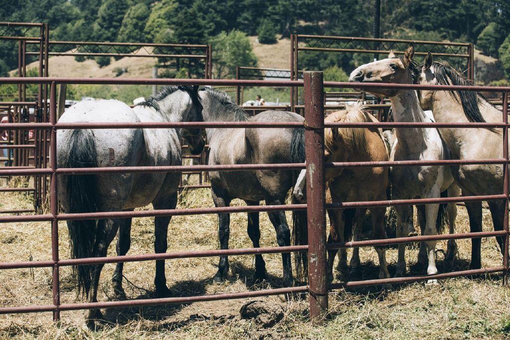 The2Bandits - horses