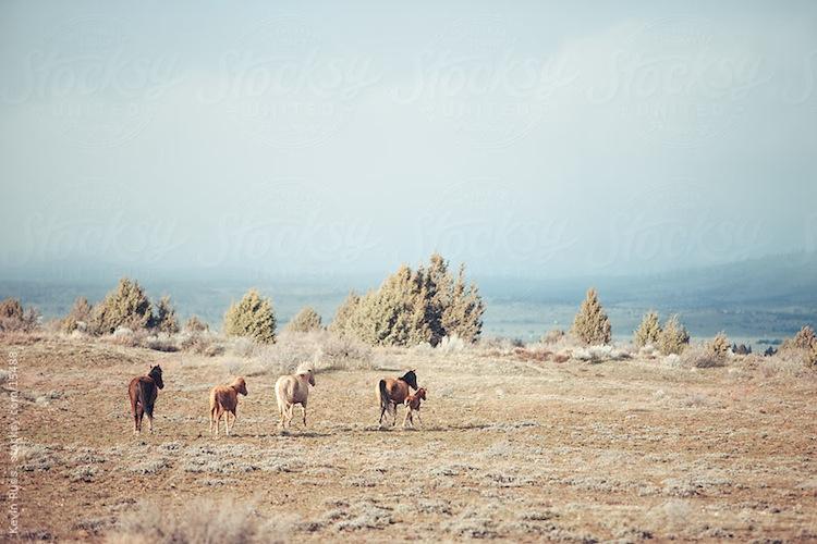 Kevin Russ - horses