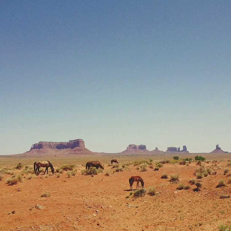 horses by Kevin Russ