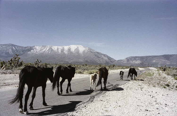 Kevin Russ - horses on the road