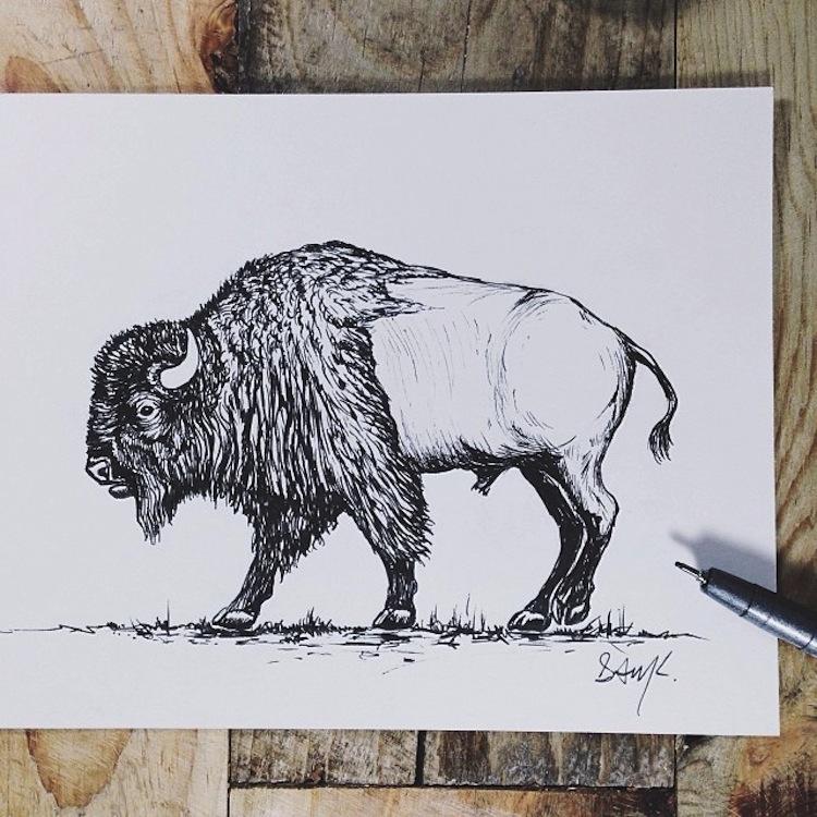 Sam Larson - bison