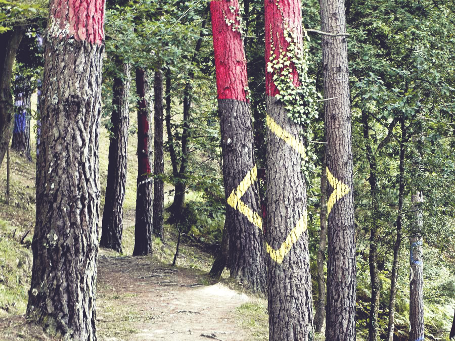 art - painted forest